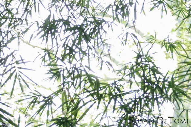 lightplay on bamboo