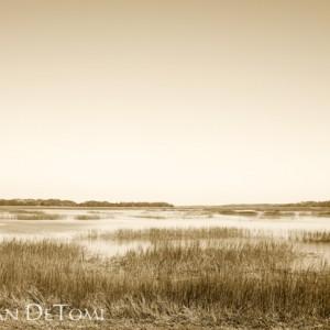 Winter marsh at Botany Bay Plantation