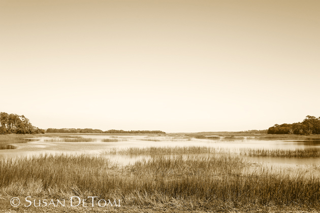 Winter marsh at Botany Bay Plantation