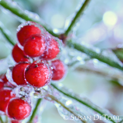 Icy red berries