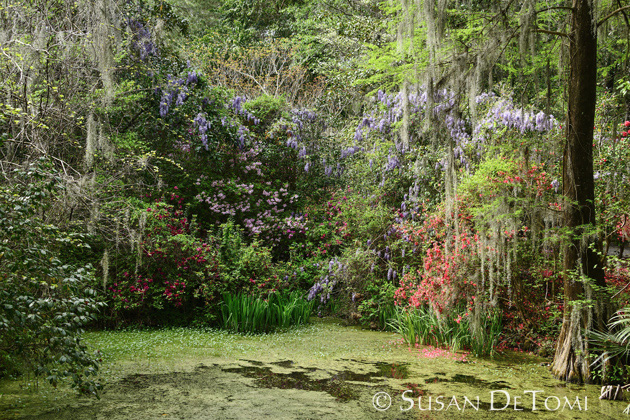 Enchanted fairytale-like garden at Magnolia Plantation