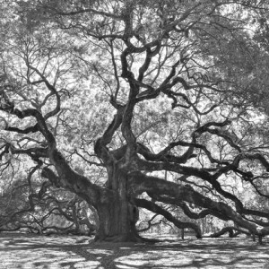 Angel Oak casting its shadow