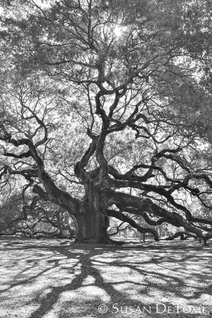 Angel Oak casting its shadow