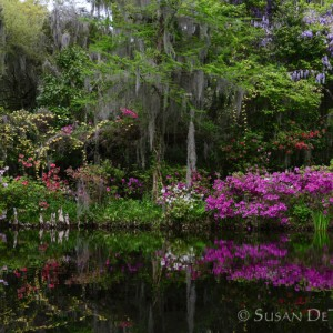 Perfect medley of Southern and native plantings