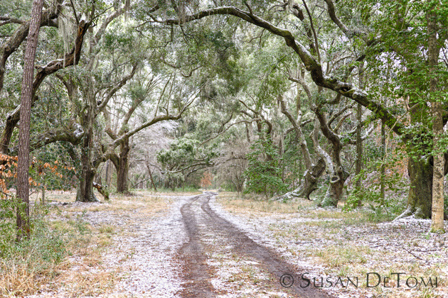 Lowcountry back road dusted with snow
